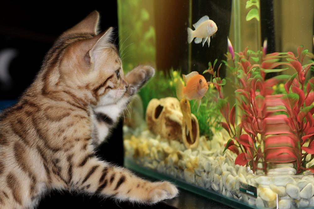 Aquarium Umzug? 7 hilfreiche Tipps | So geht's richtig!