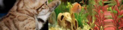 Umzugskalkulator für Aquarium Umzug? 7 hilfreiche Tipps | So geht's richtig!