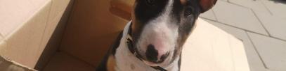 Umzugskalkulator für 7 Tipps was du bei einem Umzug mit Hund beachten solltest
